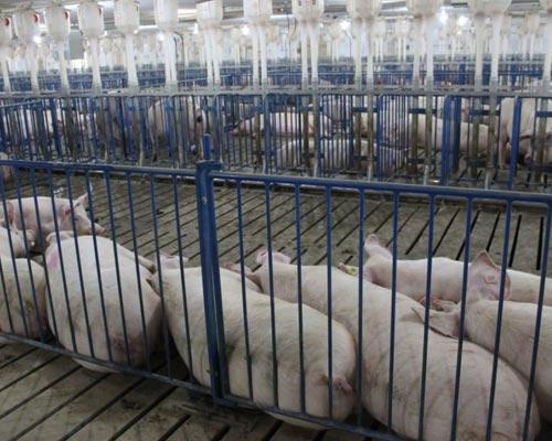 Hoq Equipment Breeding Gating