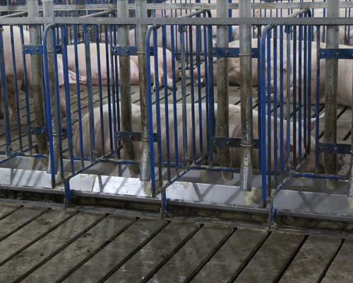 Hoq Equipment Gestation Stalls